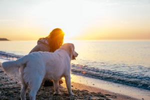 young female with retriever dog playing on the beach during sunset or sunrise