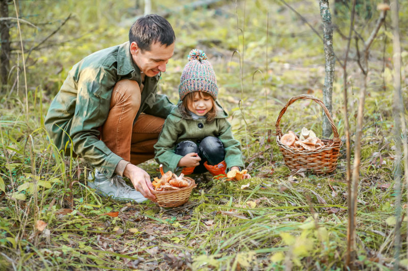 Father and daughter picking mushrooms in the forest.Father and daughter picking mushrooms in the forest.Father and daughter picking mushrooms in the forest.Father and daughter picking mushrooms in the forest.